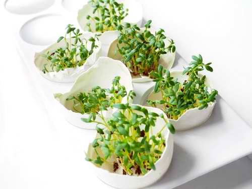 Comment faire pousser naturellement des graines germées chez soi : des exemples de graines germées dans des petits bocaux