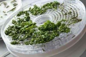 Faire sécher des herbes aromatiques avec un deshydrateur