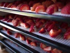 Plateaux de fraises allant passer au deshydrateur