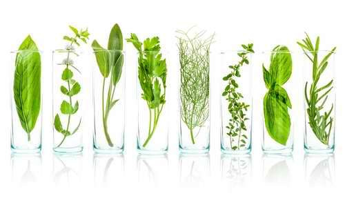 Flacons avec des herbes essentielles