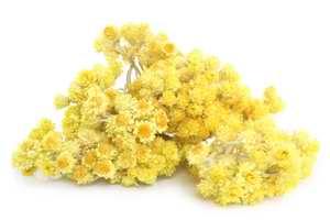 Fleurs d'helichryse italienne