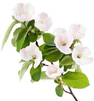 Le Top 10 des fleurs de Bach
