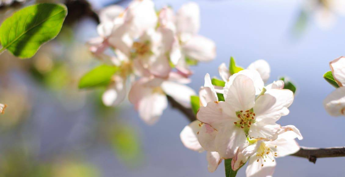 Les fleurs de Bach : de doux remèdes au service de votre équilibre émotionnel