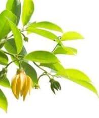 ylang ylang : la fleur du féminin