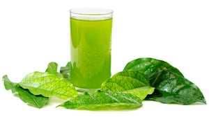 Les jus verts contiennent de la chlorophylle