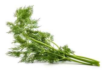 Le fenouil : il n'est pas très riche en chlorophylle, mais c'est une très bonne base pour confectionner les jus verts.