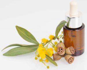 Il existe neuf sortes d'huiles essentielles d'eucalyptus