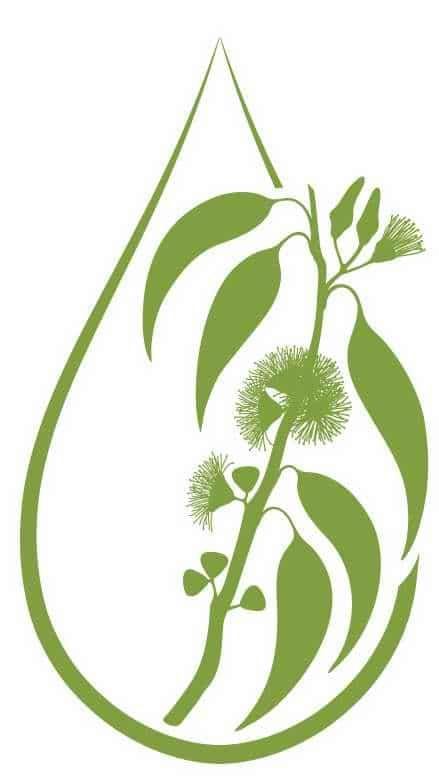 Les huiles essentielles d'eucalyptus sont mucolytiques