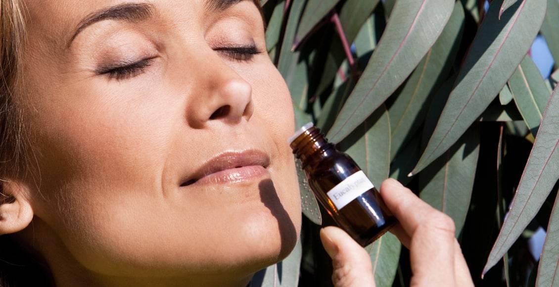 Caractéristiques et propriétés des 9 types d'huiles essentielles d'eucalyptus