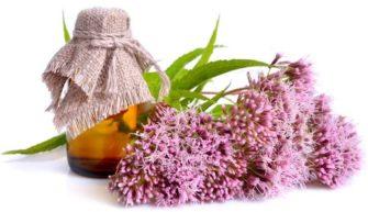 L'eupatorium prévient les infections à répétition, telles que les rhumes ou la grippe
